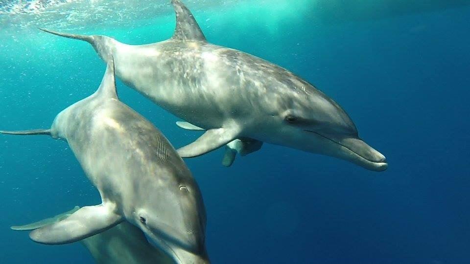 In Hurghada Mit Delfinen Schwimmen Tipps Mit Abenteuer Garantie