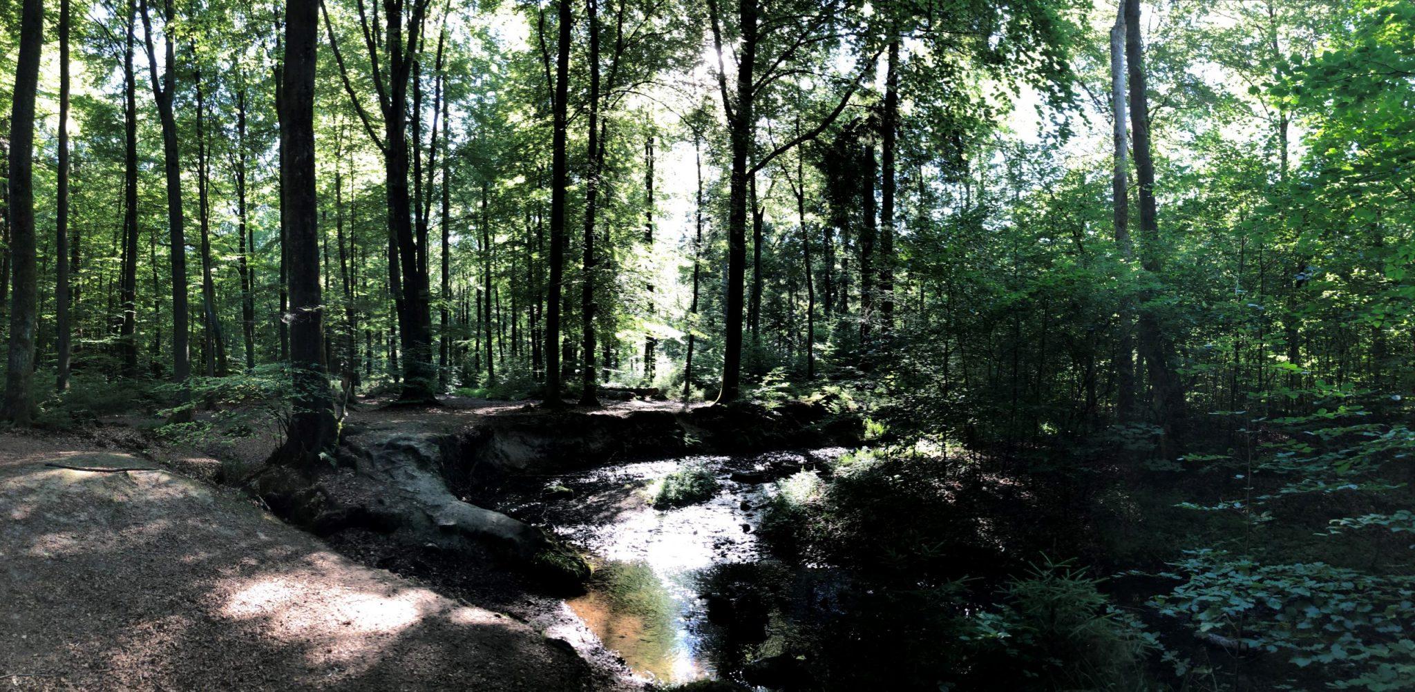 Silberbachtal - Nachhaltigkeit für die Natur